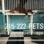 Baltimore Pet Shoppe